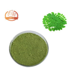 Extracto de hoja de Moringa oleifera polvo de hoja de Moringa