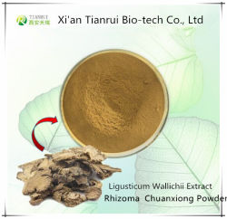 Estratto di Ligusticum Wallichii della polvere di Chuanxiong della medicina dell'erba
