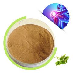 Cliquez sur échantillon gratuit prix d'usine Fabricant cosmétique d'alimentation de 4 e année : 1 Extrait de racine de l'ortie en stock