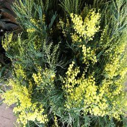La vente en gros de fleurs coupées fraîches Christams fleur pour Bouquet floral
