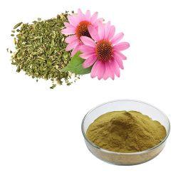 La meilleure qualité Organic Echinacea purpurea Extract extrait d'échinacée