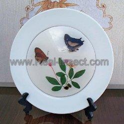 Placa de borboletas, decoração de Desktop (BF536)