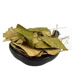 Yinxingye buon prezzo foglie di ginkgo medicinali di alta qualità