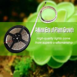 El crecimiento vegetal de la luz de la tira de LED