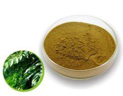 Buona qualità del foglio dell'oleuropeina verde oliva dell'estratto 10%-30%