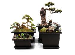 12 Pot van de Pot van de Tuin van cm de Plastic Violette Zanderige voor de Succulente Planter van het Kinderdagverblijf van de Installatie