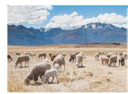 Zufuhr-fotosynthetisches Bakterium für Geflügel u. Viehbestand führt Zusätze