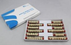 SA21 dentes de resina acrílica de duas camadas