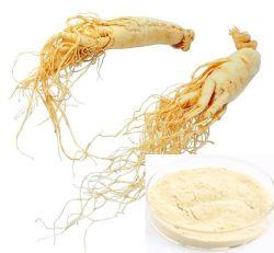 Extrato botânico Panax ginseng puro extrato de raiz tem efeito estimulante sobre o Sistema Nervoso Central