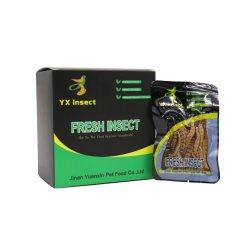 Superworms fresco de la nutrición de alta para la alimentación de aves de corral
