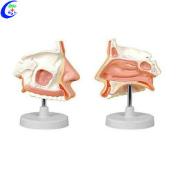 医療用鼻用キャビティ解剖学教育モデル