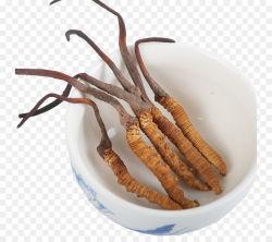 Réduction du cholestérol Cordyceps Sinensis extraits de plantes d'aliments santé Fitness