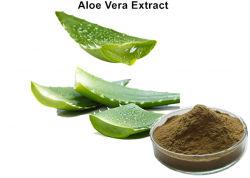 Polvere verde brunastra dell'estratto della Vera dell'aloe antinfiammatoria