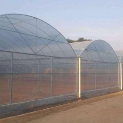 Gutes Preis Multi-Überspannung PE/Po Plastikfilm-landwirtschaftliches Gewächshaus mit Hydroponik-System für Tomate-Gurke-Kopfsalat-Pfeffer