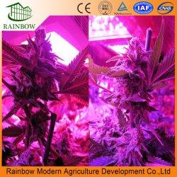 La serra fissa LED si sviluppa chiara per le verdure