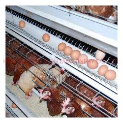[بوول] آليّة بيضة تجميع آلة بطارية طبقة يحبس دجاجة سعر