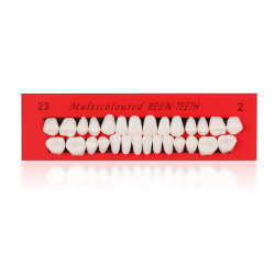 치아 교육용 모델 플라스틱 이빨 모델