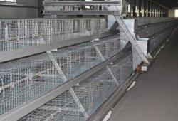 A/H type Cage/animal Husbanfry ferme avicole de poulet ou de bétail de l'équipement des machines/équipements/galvanisé à chaud de la cage de Volaille Poulet automatique Ferme /Ca de la couche de la batterie