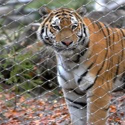 Zoo Ferruled de acero inoxidable malla pajarera de malla de alambre de la jaula de animales