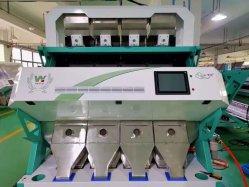 Cor Canela Sorter Máquina Usada em Canela em linha de transformação