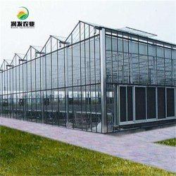 مشروع تطوير طرق إدارة المياه الزراعية في مشروع توماتو للزجاج الزجاجي بناء سريع لروسيا
