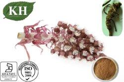 Kingherbs' 100% naturel extrait Butterbur/Petasites Hybridus extrait : 15 % Petasins