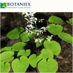 Herb médecine chinoise pour fonction d'agrandissement de pénis Epimedium Leaf P. E.