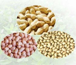 Erdnuss in Shell