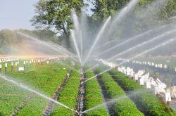 Капать ирригационного оборудования для сельского хозяйства парниковых