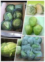 Verse Kool verse groenten Groothandelsprijs uit China