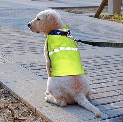 На заводе собака одежду животные Майка безопасности отражает собака куртка