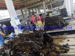 Polvere 100% dell'estratto solubile dell'alga di Watel/fertilizzante fogliari organici del fiocco per frumento