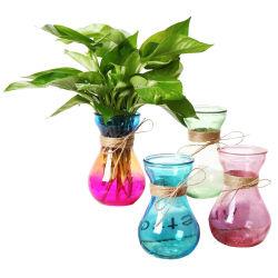 Fleur de verre bouteille Vase en verre transparent Vase en verre teinté pour les plantes et fleurs