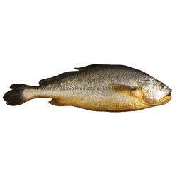 يجمّد أصفر متشائم سمكة [هيغقوليتي] كاملة مستديرة يجمّد سمكة