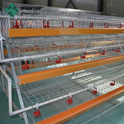 Granja avícola utiliza un tipo escalera gallina ponedora jaulas de recolección de huevos de pollo con la máquina
