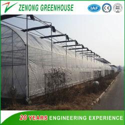 Estructura de acero tipo arco de la película de poliéster/PC cubierto de hojas o flores de invernadero de hortalizas y frutas/Experimento/Eco Restaurante