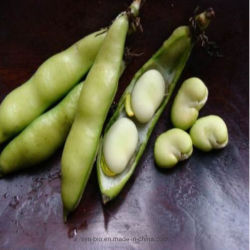 Aminoácido Beta-Alanine Medicina Farmacêutica Alimentação de matérias-primas&aditivo alimentar
