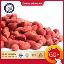 販売のための安い乾燥されたカーネルピーナツピーナッツの未加工か新しく赤い皮Arachid