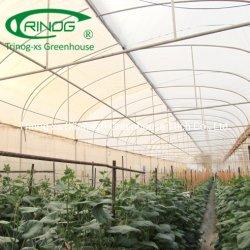 판매를 위한 현대 실내 수직 수경법 시스템 농장 녹색 집