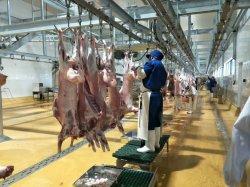Nuova macchina per la macellazione automatica per la lavorazione della carne per pecora/capra/taglio/refrigerazione professionale