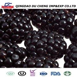 Frutinhas congeladas Preto típicas frutas Blackberry