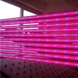 Crecer comerciales en interiores de alta potencia de iluminación LED sin ventilador 720W Tubo de luz crecer