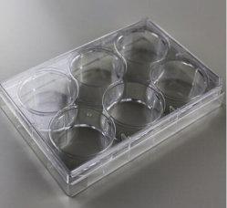Placa de cultura de tecidos ou células com 6 poços