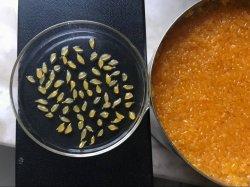 Venda por grosso de mandarinas em conserva laranja comida SSAC