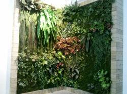 Китай оптовой искусственного зеленый Palnt стены с УФ