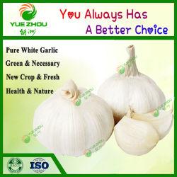 La agricultura orgánica de alimentos /normal de Ajo Ajo Blanco puro de alta calidad fabricado en China