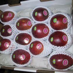 Internation cubierta de la fruta de mango estándar exportador neto de la mosca de la pantalla de supermercados