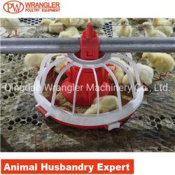 دجاجة مغذية لأنّ شواء/حوض طبيعيّ يغذّي نظامة