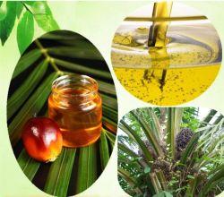Kamelie Sinensis Startwert- für Zufallsgeneratorpflanzenwesentliches Öl CAS-Nr. 68917-75-9 für Haut-und Haar-Duft-Öl-Nahrungsmittelaroma-Unterseiten-Öl-wesentliches Öl