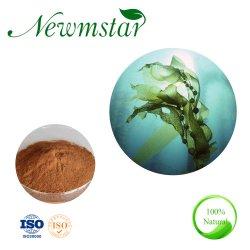 A natureza de algas Wakame Extrato de Sargassum, Pó de algas marrons extracto, extracto de algas marinhas em pó para a função de cuidados com a pele